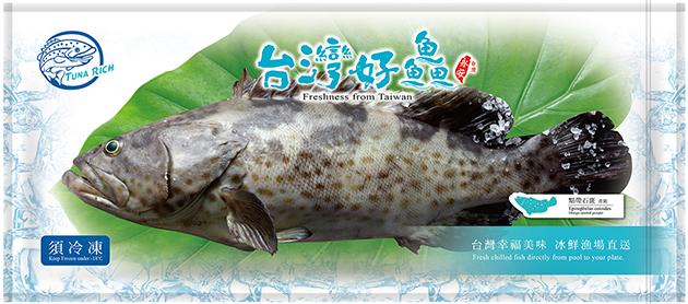 點帶石斑魚(青斑) 2