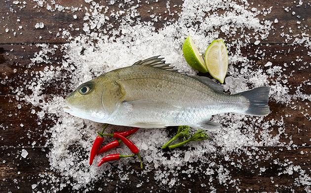 星雞魚(金龍) 1