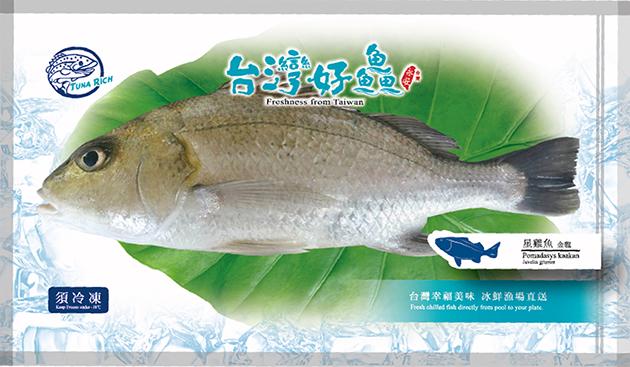 星雞魚(金龍) 2