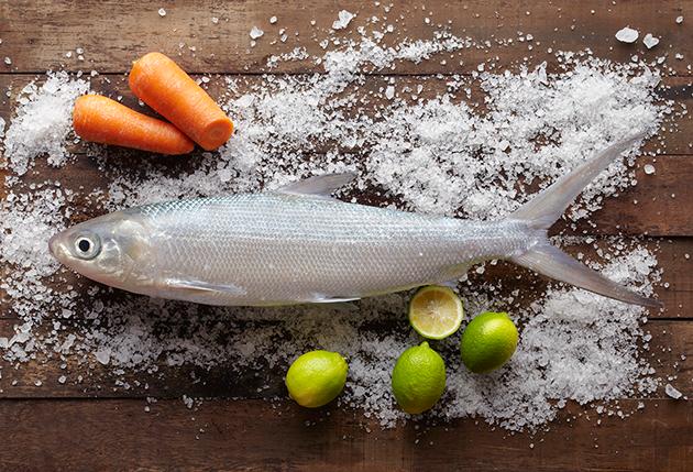 虱目魚(牛奶魚) 1